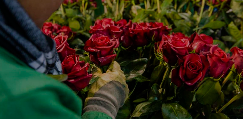 rosas_2.png