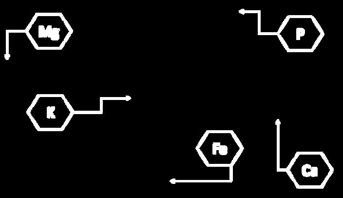 formula-cacao.png