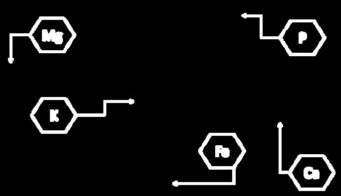 formula-mango.png