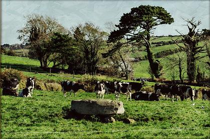 Coorleigh South