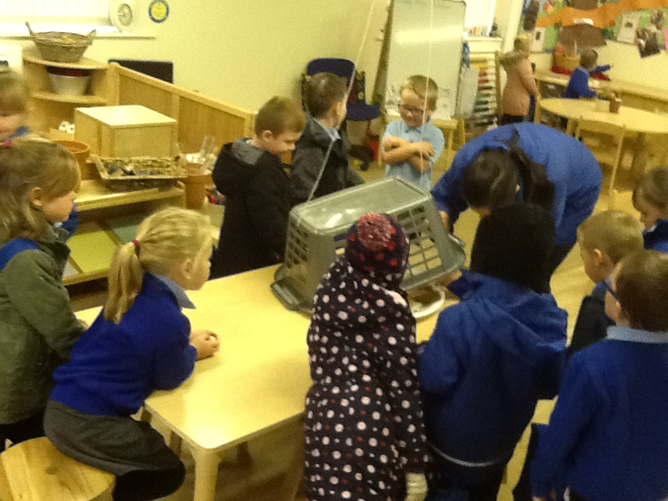 Trapping gingerbread men