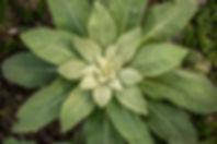 017-Gartenfotos-060618.jpg