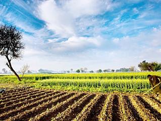 Çiftçi Olmaya Ne Dersiniz?