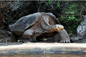 Watch, observe and interact with giant turtles in the Galapagos by going to a natural reserve.