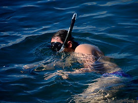 Snorkel with reef sharks Galapagos, 20% off Bucket Pass