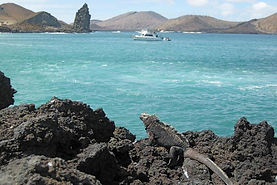 Visit Tortuga Beach Bay on the Galapagos Islands to see the beautiful natural diversity