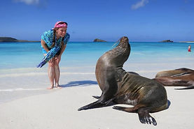 Snorkle, swim and play with the islands' popular sea lions at the Galapagos.