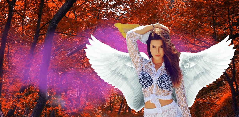 fall wings fragrance .jpg