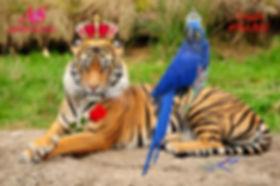 Catking & ladybird.jpg