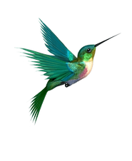 kolibri  1.png