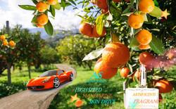 Happy Color Orange