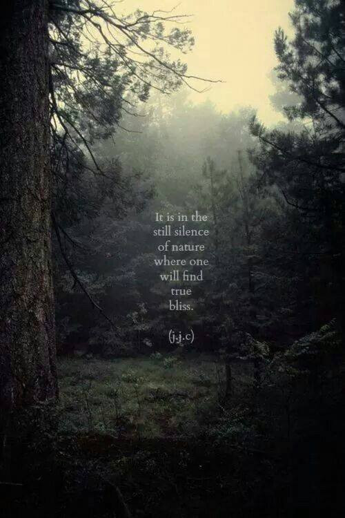 xenia silence of nature.jpg