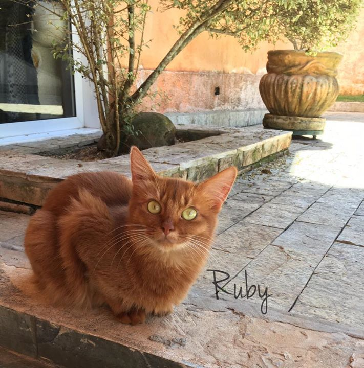 Good morning Ruby ❤️