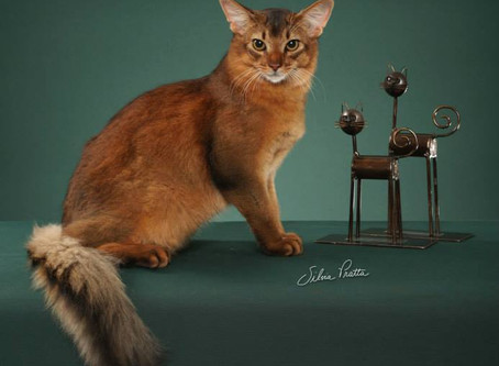Cazanova, um Show de gato!