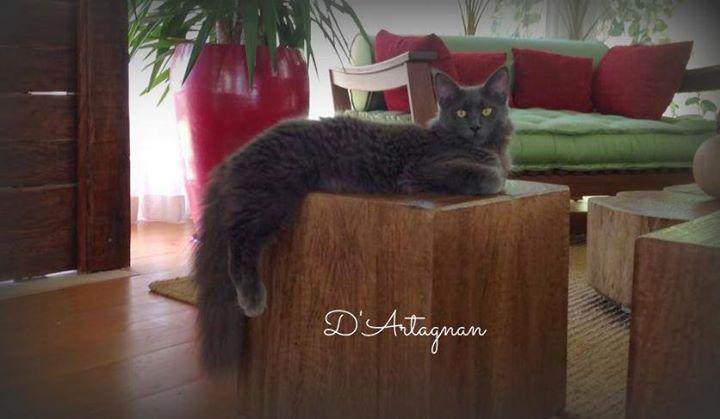 D'Artagnan - 8 meses <3