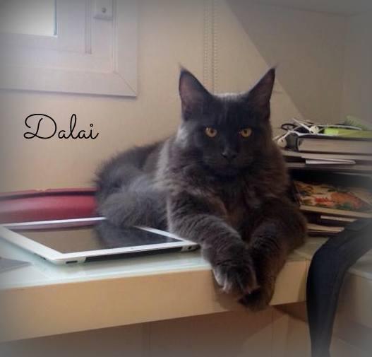 Dalai - 8 meses <3