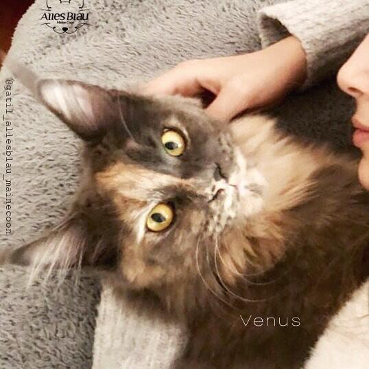 Venus, super amada por _annaflaviajuliam