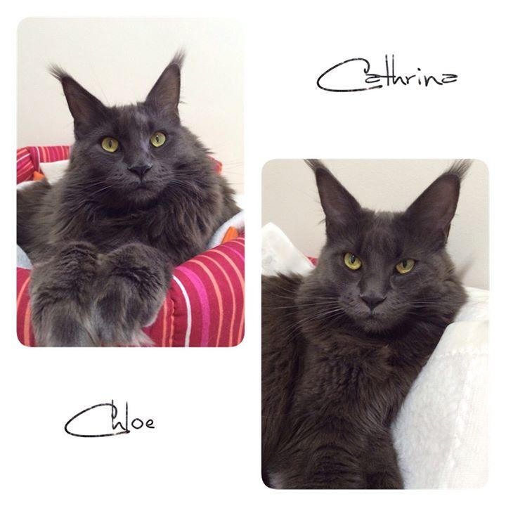 Chloe e Cathrina