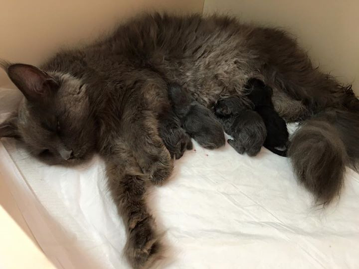 Mamae feliz e exausta na hora do parto....e ainda faltam alguns!