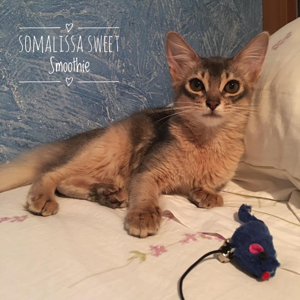 Somalissa Sweet Smoothie