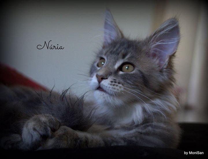 _3 Núria _3