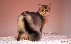 Hello Musia!!!__Somalissa Sweet Smoothie