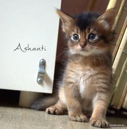 Ashanti 1 mês