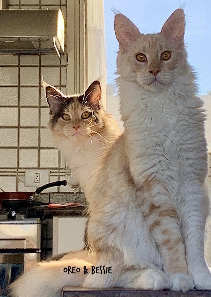 Oreo & Bessie