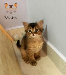 Bandita