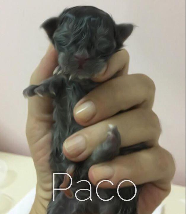 BR_Alles Blau Paco - recém-nascido