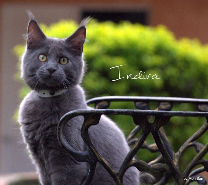 BR* Alles Blau Indira