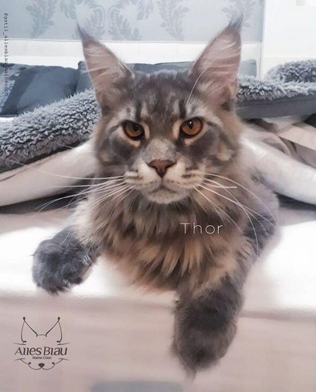 Thor, sendo lindo e muito amado com _r0g