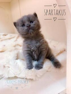 Alles Blau Spartakus - 18 dias