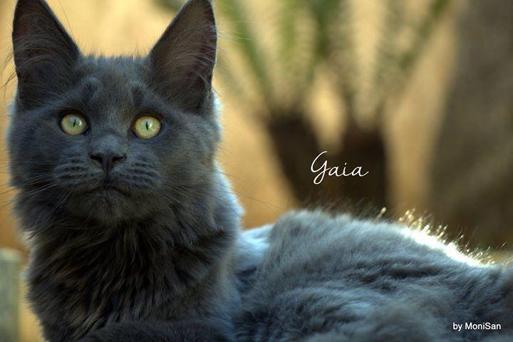 Alles Blau Gaia _3