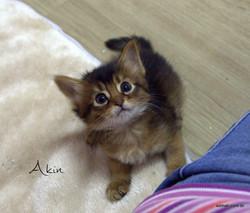 Akin 1 mês