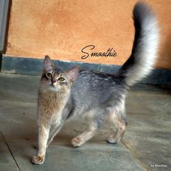 _3 Smoothie _3