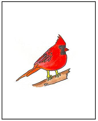 St. Louis Cardinal