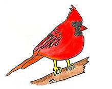 st. louis cardinal.jpeg