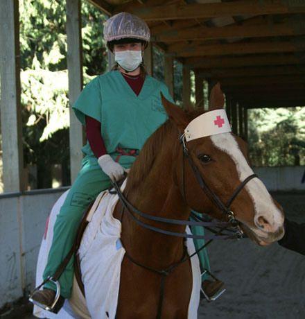 CARMEN HORSE DOCTOR!