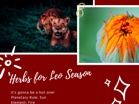 Don't Be Afraid to ROAR: Herbs for Leo Season