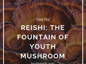 The Medicinal & Spiritual Benefits of Reishi Mushroom