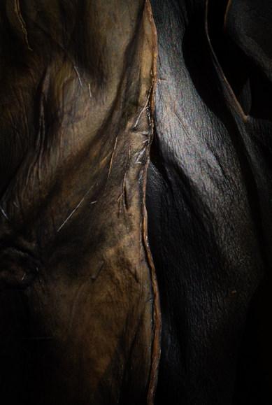 Kelp: bronze sutures