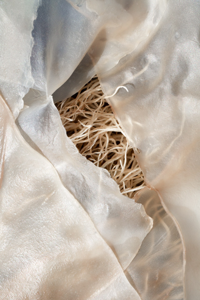 Kelp abstract: ivory threads