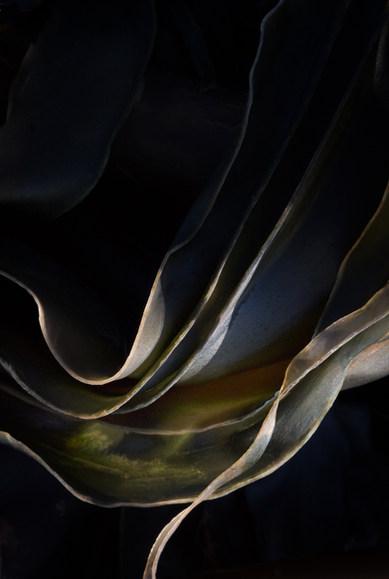 Kelp: ribbons