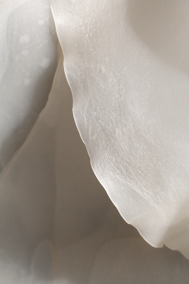 Kelp abstract: ivory ripple
