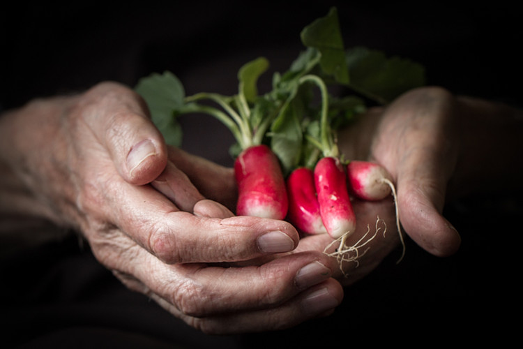 Dad's Hands with Radishes