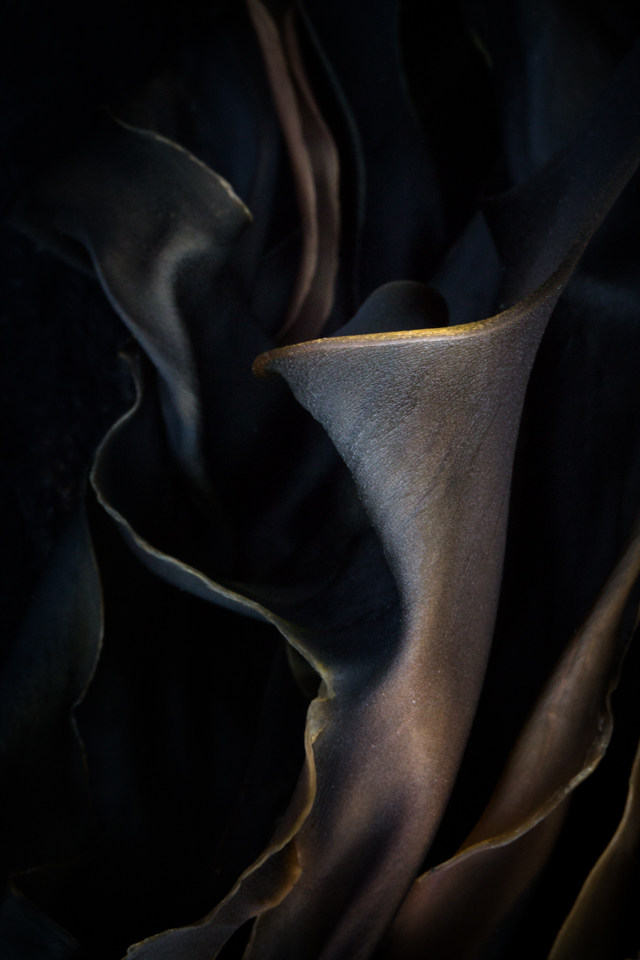 Kelp abstract: urn