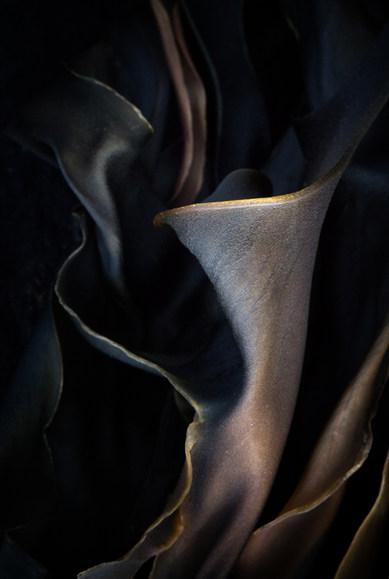 Kelp: urn