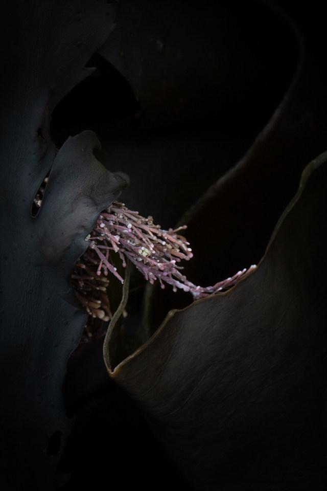 Kelp abstract: pink posy