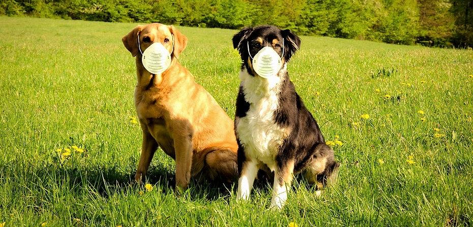 dogs-5576471_1280_edited_edited.jpg